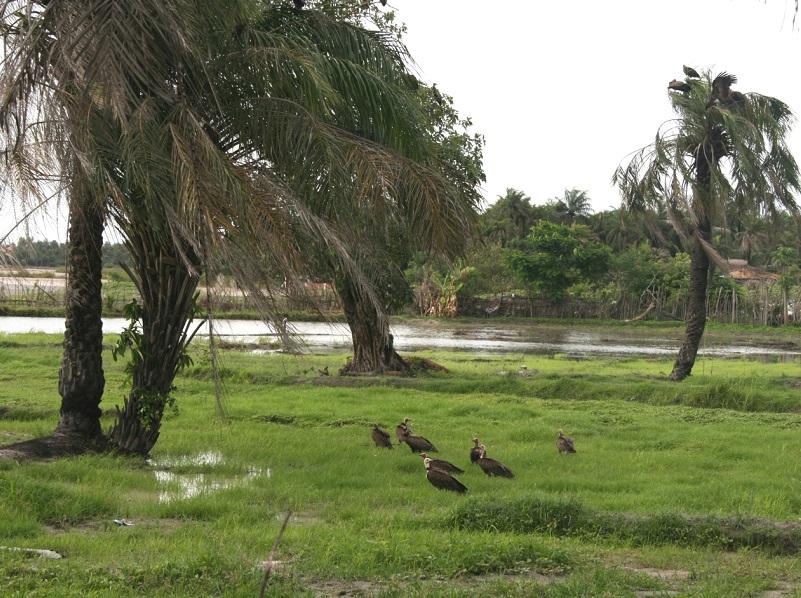 La Casamance au Sénégal - DR : Olivierkeita wikicommons