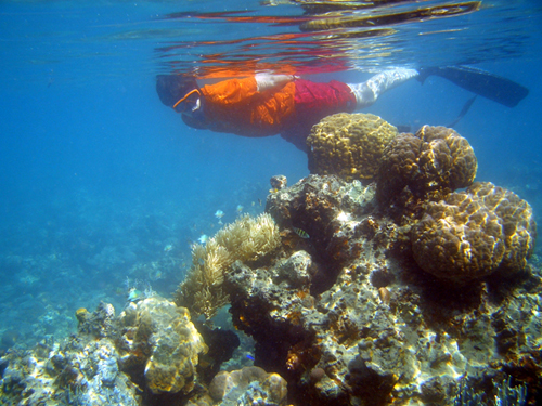 le snorkeling concerne souvent des personnes peu ou pas formées qui s'approchent trop près des récifs et les abiment volontairement ou pas  - photo Masato Ikeda / wikicommons