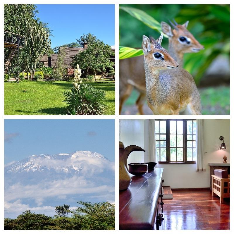 Arumeru River Lodge propose 32 bungalows, un restaurant, un bar, une piscine et un spa et une vue sur le Kilimandjaro - DR