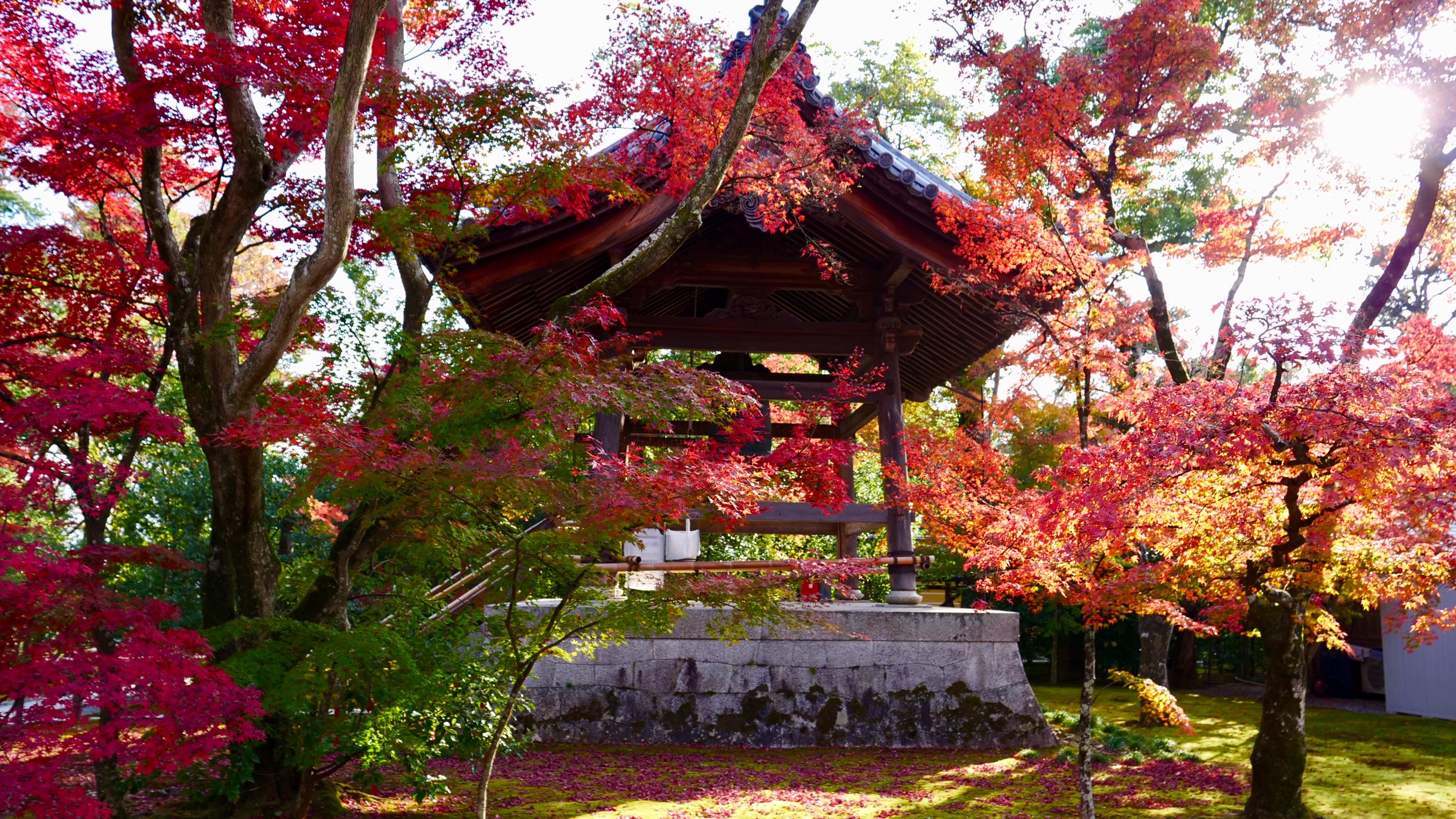 Les couleurs automnales du Japon © Laurie Medina