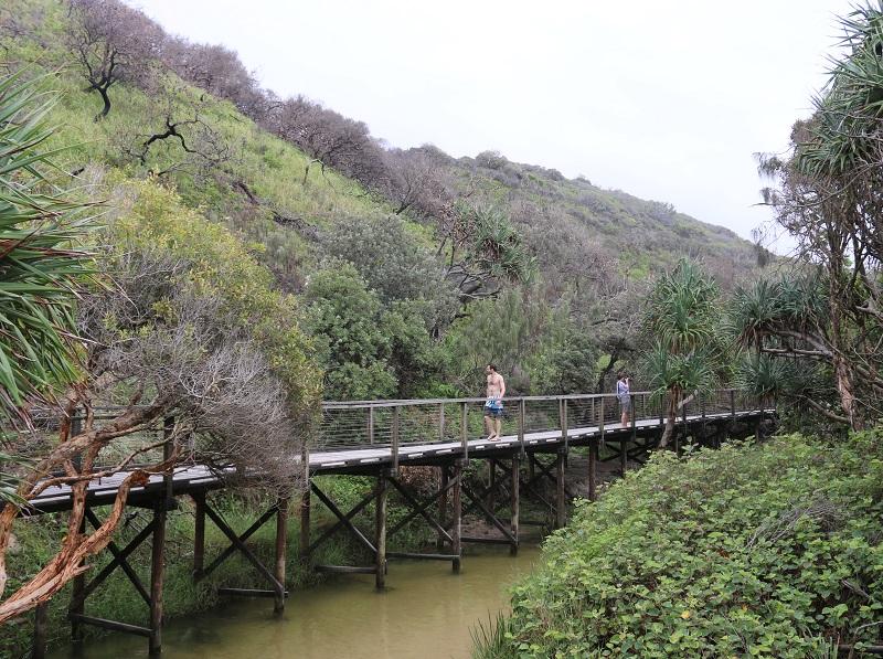 On vient à Fraser Island pour apprécier l'environnement unique de cette île « hors du monde », jetée à la face d'un Pacifique rugissant - DR : J.-F.R.