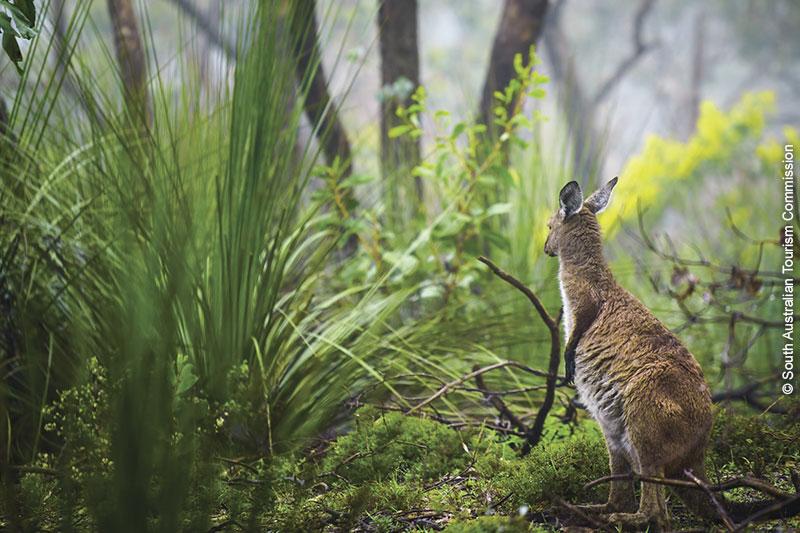 Adélaïde / Australie du Sud : une nature et une faune typiques