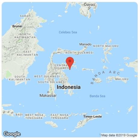 Une alerte au tsunami a été émise puis levée.  - DR
