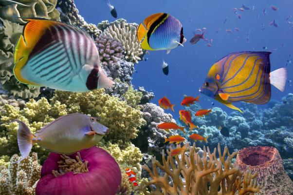 La station balnéaire de Sharm-El-Sheikh est très appréciée des plongeurs et bénéficie d'un panel exceptionnel de poissons exotiques : poissons-clowns, raies, tortues ou dauphins - DR : FTI Voyages