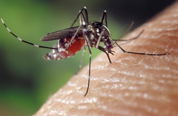 Thaïlande : recrudescence des cas de dengue - Crédit photo : Pixabay, Image parWelcome to all and thank