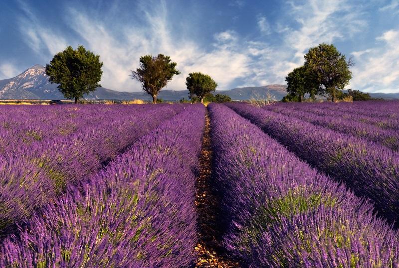 On note un recul de la clientèle britannique, qui au printemps, n'est plus au premier plan de la fréquentation internationale des destinations françaises, devancée par les Belges - Depositphotos.com akarelias