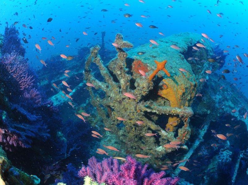 Légende : Les fonds marins autour de l'île de Porquerolles – crédit photo : Mio Palmo Plongée
