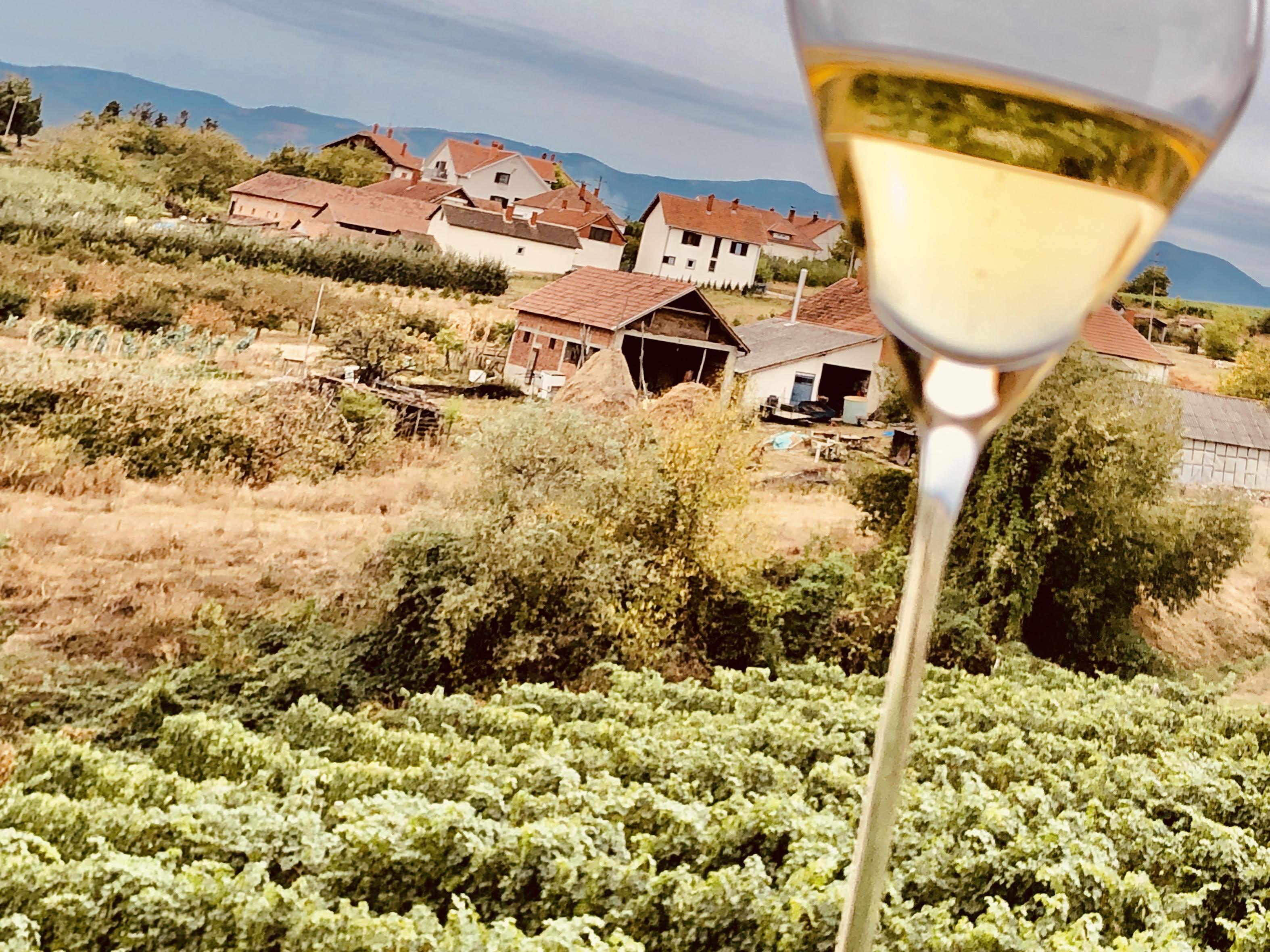 Un vignoble et des vins surprenants... /crédit photo JDL