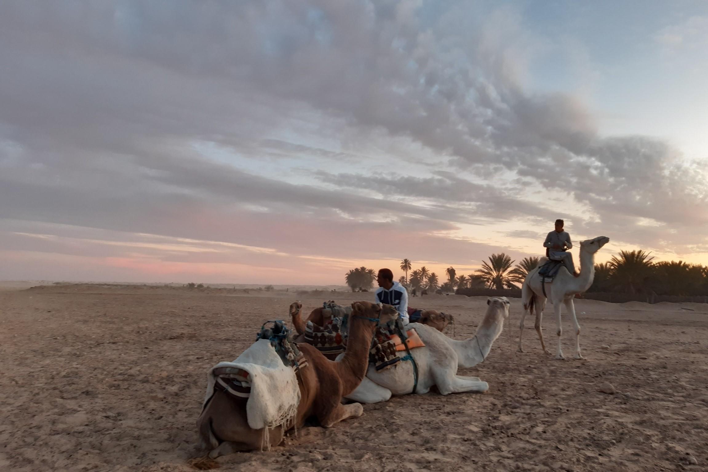 """A Douz, la journée se termine. Les derniers touristes sont partis. Les chameliers vont rentrer chez eux. Ici, sur l'esplanade de Ahmed, le patron de Pegase Tunisie, point de départ des amateurs de balades à dos de chameau ou de location de quads. A proximité du futur """"The Residence Douz"""" encore en chantier - DR : M.S."""