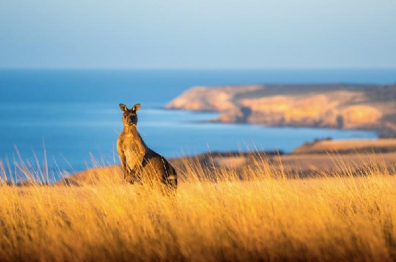 Kangaroo Island, Australie du Sud