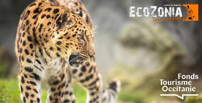 EcoZonia Terre de Prédateurs sera situé dans les Pyrénées Orientales, à Cases-de-Pênes (66) sur une surface de 26 hectares - DR