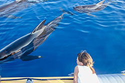 Vertical Horizon - Observation des baleines et dauphins / Cédric Brun