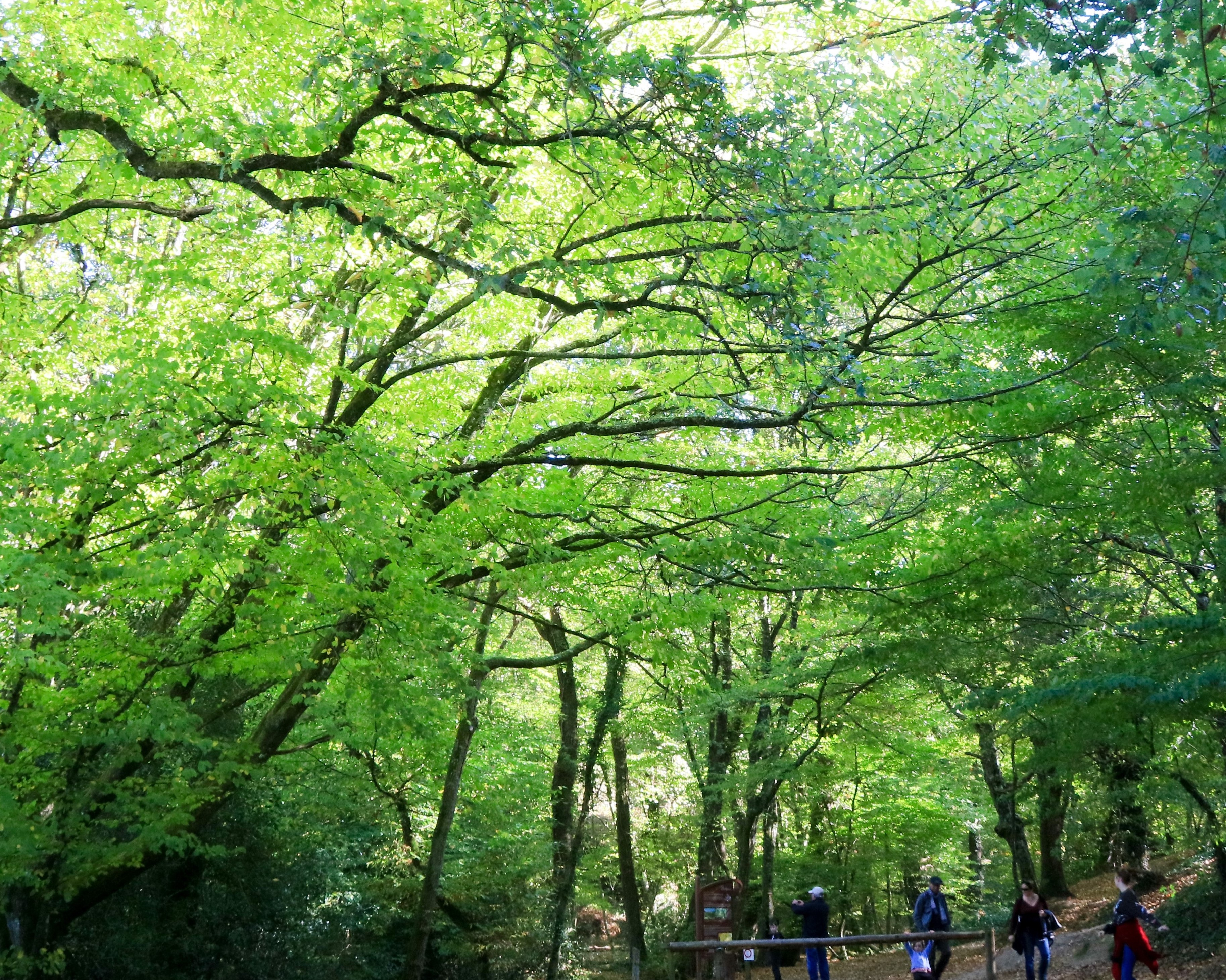 Sentier en forêt de Brocéliande. loïc Kersuzan. Morbihan Tourisme.