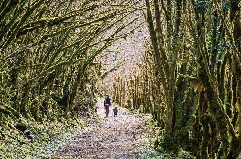 La gourgue d'Asque, la petite Amazonie des Pyrénées, une forêt où la mousse règne en maître  - DR : Mathieu Mouillet