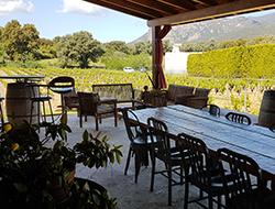 @Corsica Incoming / Vignoble
