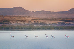 © Sir Bani Yas, Department of Culture and Tourism