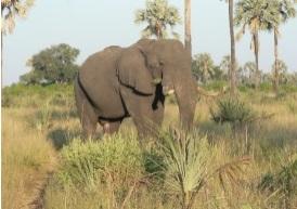 La destination propose des safaris - DR