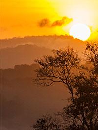 © NQuendezctguyane / Soleil levant sur la canopée