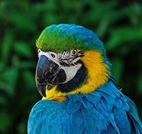 © pixabay.com - Portrait de Ara d'Amazonie