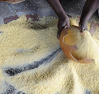 © JeHayctguyane - Préparation du couac (manioc)