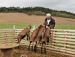 © Escapade gourmande / Jacky chèvres