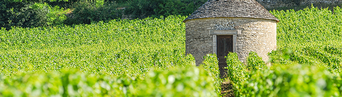 Cabotte au milieu des vignes © Alain DOIRE / Bourgogne-Franche-Comté Tourisme