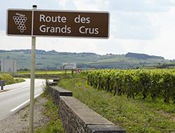 La route des Grands Crus © Dijon Tourisme