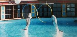 Le Parc Astérix annonce la fermeture de son delphinarium