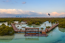 Jubail Island Mangrove Park © Abu Dhabi Department of Culture and Tourism
