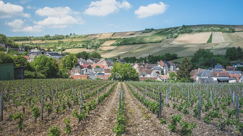 @ Teddy Verneuil - Vignes & coteaux à Chavignol