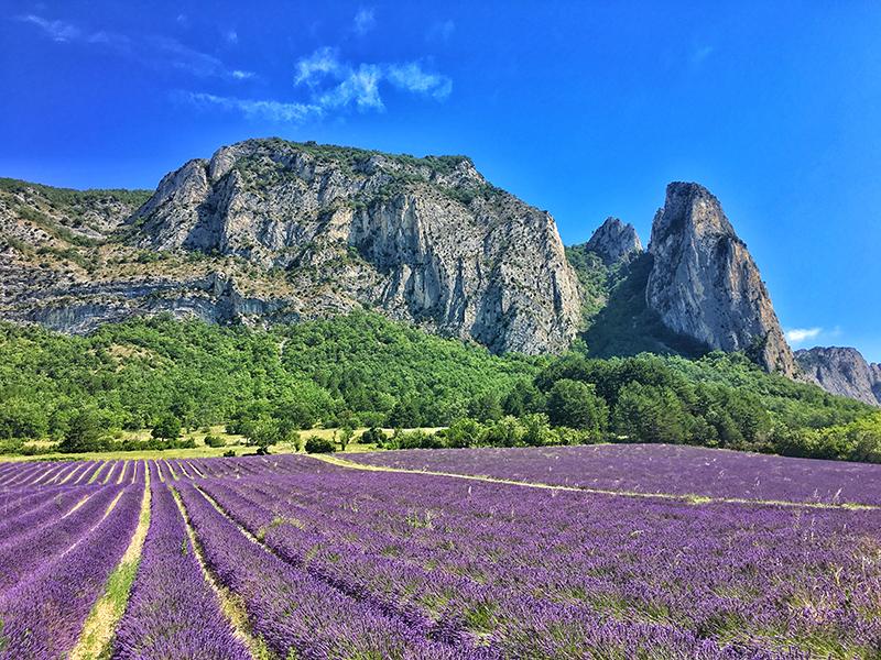 © Vallée de la Drôme - champs de lavande au pied des falaises de Saou