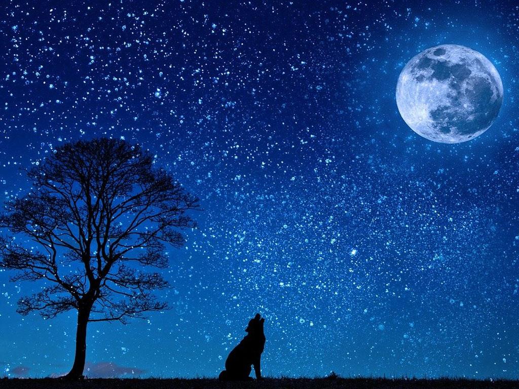 L'homme n'est pas la seule victime de la lumière, les plantes et les animaux le sont tout autant. Bien que la recherche soit encore loin d'avoir exploré le sujet en totalité, il semblerait que les mammifères marins et les oiseaux migrateurs comptent parmi les premières victimes de ces agressions lumineuses.  - Image par Pezibear de Pixabay