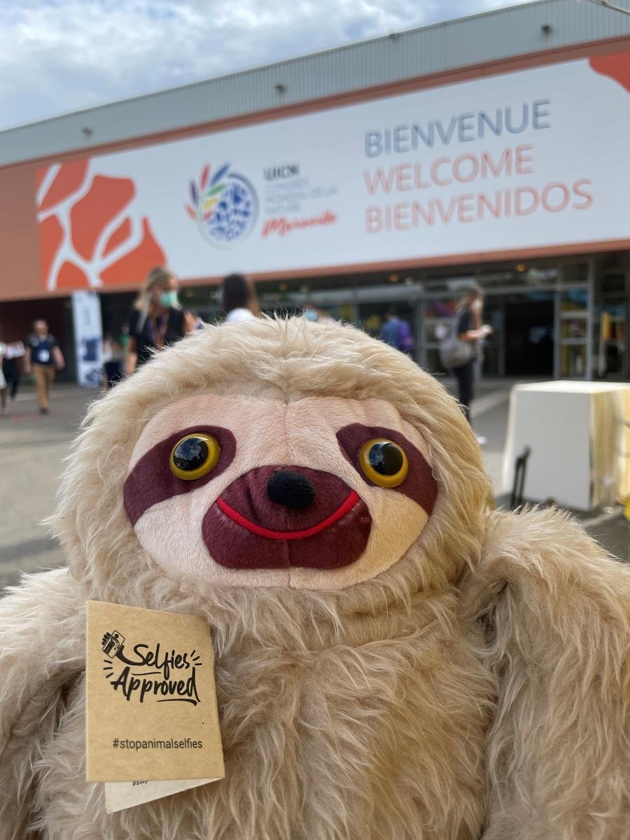 """Le Costa Rica assure la promotion de la campagne """"Stop Animal Seflies"""" - DR"""