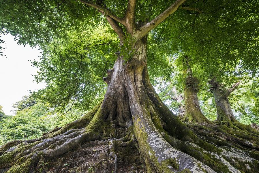 Le label europarc permet aux parcs régionaux français d'avoir une notoriété européenne. DR : © Vera Kuttelvaserova - Fotolia.com