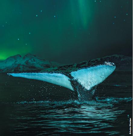 Hurtigruten veut à tout prix faire découvrir les aurores boréales à ses passagers - Photo : Hurtigruten