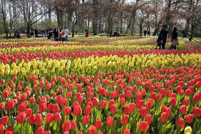 En 2015, le plus beau parc printanier du monde a atteint un record de fréquentation en accueillant 1 175 000 visiteurs - DR