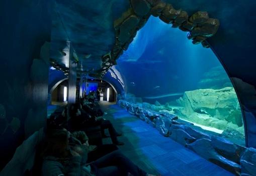 Avec son Medusarium, l'Aquarium de Paris cherche à sensibiliser ses visiteurs à la gélification des océans - Photo : Aquarium de Paris