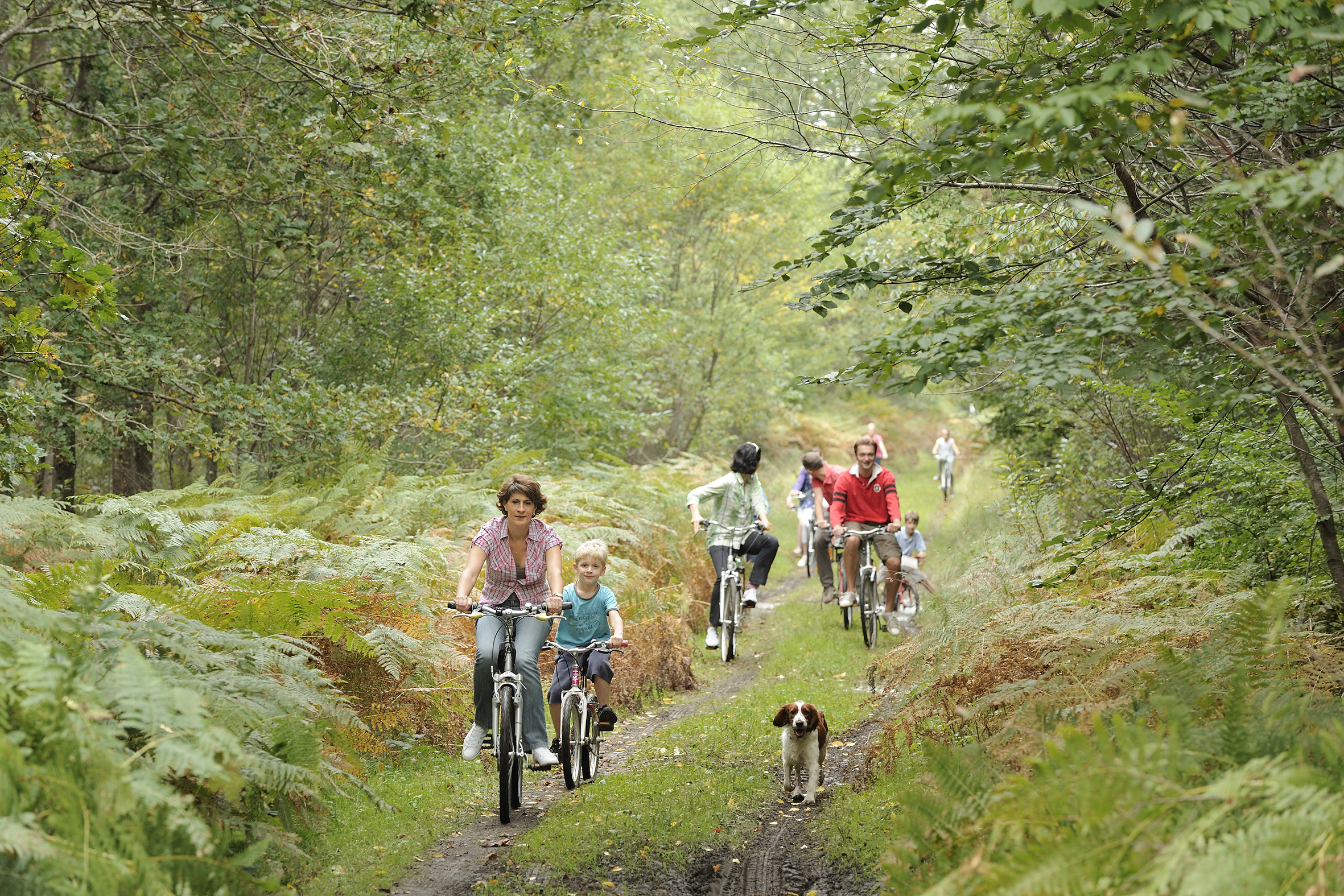 Biking in the forrest (Photo: Oise Tourisme, Jean-Pierre Gilson)