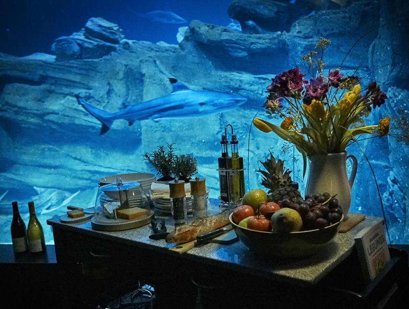 Airbnb : l'Aquarium de Paris loue une chambre immergée dans le bassin des requins