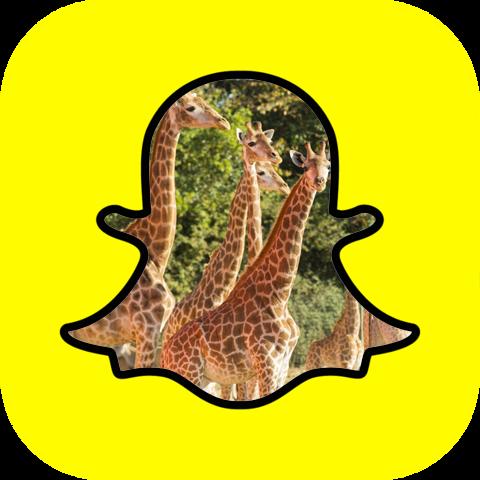 Le parc Planète Sauvage se met à Snapchat