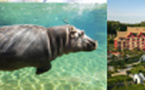 Un beau bilan 2016 pour le Zooparc de Beauval