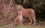Animal park Planète Sauvage celebrates its 25th anniversary