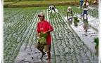 Langue, culture, territoire... le tiercé gagnant des Philippines !
