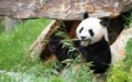 Le ZooParc de Beauval se hisse au rang des grands sites touristiques