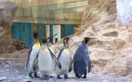 Marineland inaugure son pavillon Antartica