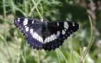 Digne-les-Bains : sur le sentier des papillons, toutes ailes déployées…