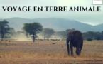 Voyage en Terre Animale s'engage pour la cause animale et environnementale