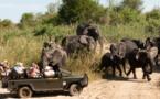 Les voyages Montessuit propose un safari en Afrique du Sud