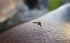 Cuba : recrudescence de cas de fièvre Zika