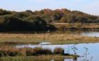 Indre : à la découverte de la Brenne, pays des oiseaux migrateurs